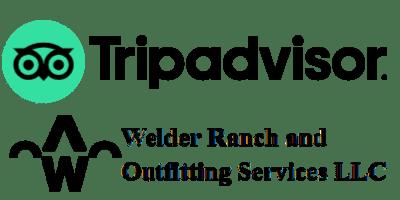 Snowmobiling adventures on Tripadvisor