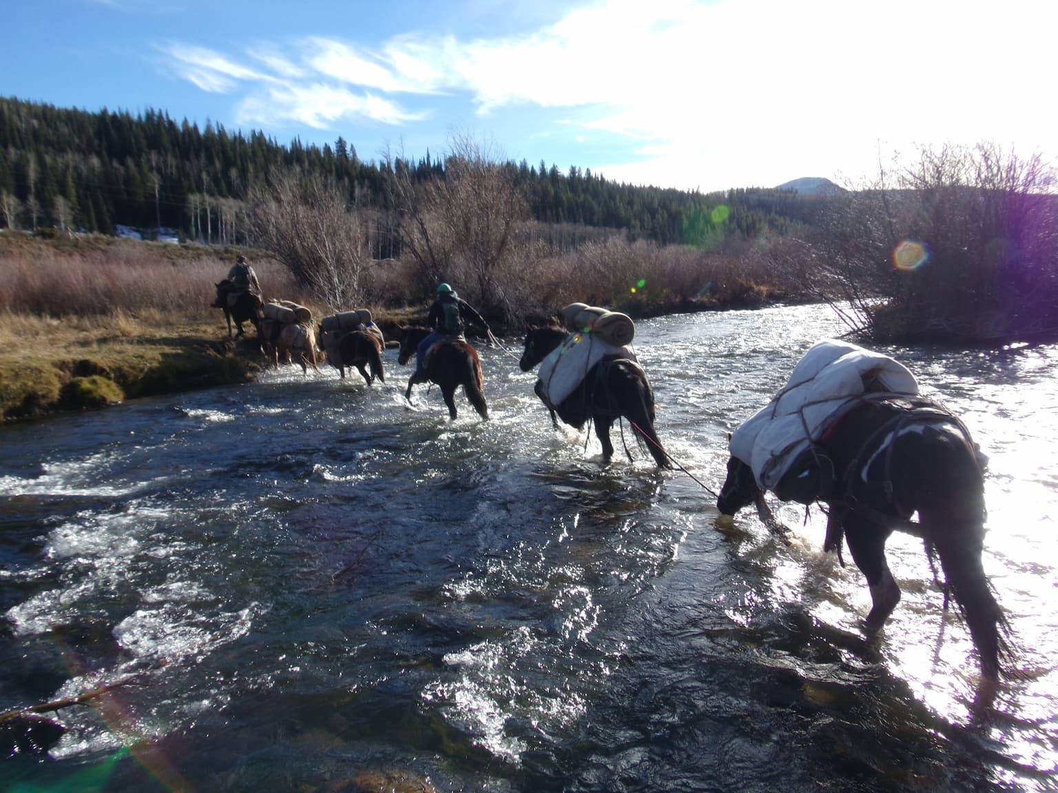 Pack String crossing White river near Meeker CO