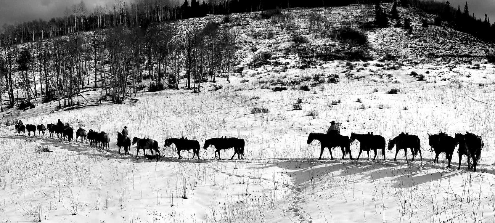 Pack Horse String at Welder Ranch